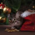 10+1 tanács Karácsonyra macskásoknak