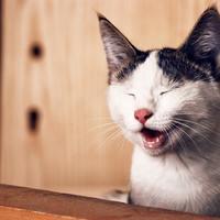 A macskád zakkantan jár alomra?