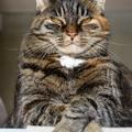Magabiztos vagy bizonytalan a cicád?