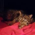 Vadkandúrkából lehet bújós cica? - 1. rész