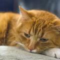 10 jel, amiből látod, ha boldogtalan a cicád!