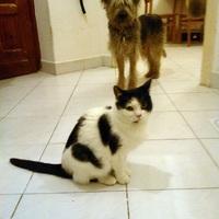 Hogyan szoktassam össze a cicámat a kutyámmal?