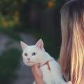 Miért olvassátok a cicás blogot? - 7 vélemény