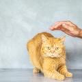 10+1 tanács, hogyan viselkedj félős cicával!