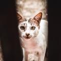 7 mód arra, hogy segíts a hontalan cicákon!