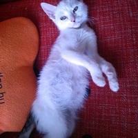 Tarthatok-e kiscicát, ha napközben dolgozom? - Macska-fogós kérdések