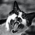 Miért ne félj a cicádtól?