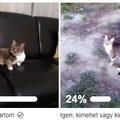 Benti vagy kinti cica? - a ti és az én véleményem