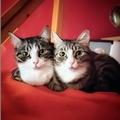 Két cica és egy energiabomba kutyus - 2. rész: alakul a barátság