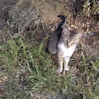 Kóbor cica projekt - Lucky kötődni kezd hozzám