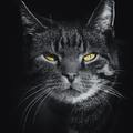 Öreg cica nem vén cica! Vagy mégis?