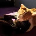 Melyik cica agresszív? - a megoldás