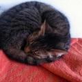 Kemi bújós cica lett! - 3. hét