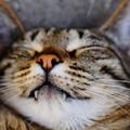 A 6+1 leggyakoribb tévhit a cicákról