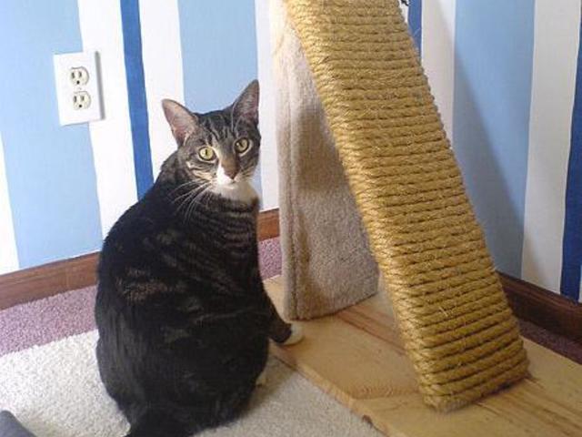 Miért nem használja a cicád az alomtálcát? Szeretem a cicámat!