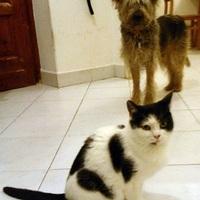 Kutya és macska - Barátok vagy ellenségek?