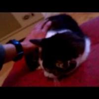 34. nap: Különleges videós bejegyzés! - Lucifer