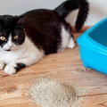 Miért nem használja a cicád az alomtálcát?