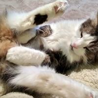 5x10 vicces pózokban alvó cica - 1. rész