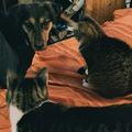 Két cica és egy energiabomba kutyus - 3. rész: Házmester cica