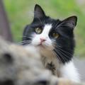 A kijárós macskák