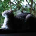 6 jele annak, hogy boldog a cicád