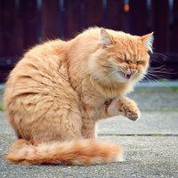 Tüsszög a cicám, mit tegyek?!