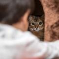 Hogyan szoktasd be a mentett cicádat a lakásba?