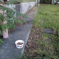 Hogyan segítsünk a környékünkön élő kóbor macskákon?
