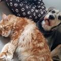 6+1 jele a kutya-macska barátságnak