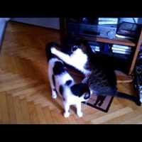 Lucifer és Lutri játszik (Vigyázz, extra cuki videó!)