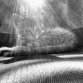 14+1 akkor és most kép cicákról - 2. rész