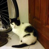 Új macskaprojekt! Lutri - avagy hogyan lesz bizonytalan cicából magabiztos macska?