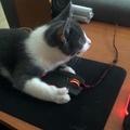 Home office macskával - galéria!