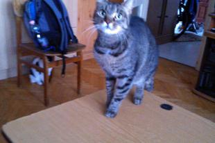 Kemi macskák közt - 9. hét