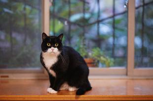 Miért nem használja a cicád az alomtálcát? - 2. rész