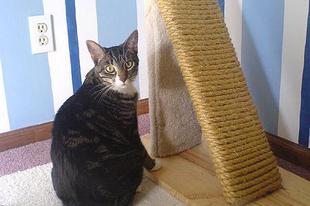 A macskám összepisili a lakást! 2. rész - Alakítsd át a területét!