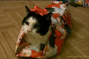 Macskát a fa alá? Inkább ne!
