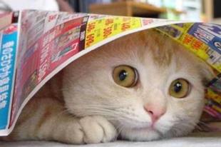Hogyan közelítsek a (félős) macskához?