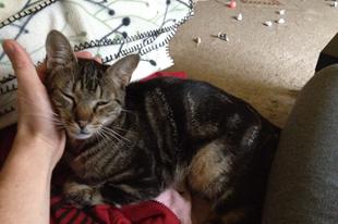 Hogyan lesz bújós cica a menhelyi cicám? - 2. rész