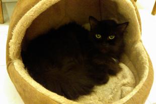 Hogyan érjem el, hogy a cicám biztonságban érezze magát a lakásban?