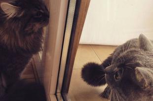 Félek a cicámtól! - 1. rész