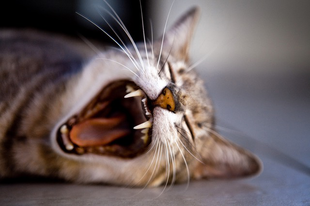 Minden a cicád megneveléséhez