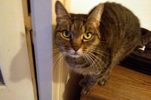 """Kemi cica """"készen van""""! - 16. hét"""