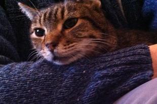 Glória bújós cica lett!