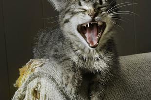 Macskakaparás vs. bútorok 1. rész