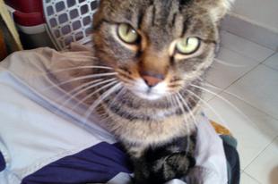 Kemi, a (vissza)beszélő cica