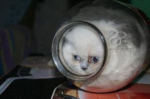 12 bizonyíték arra, hogy a macskák folyékonyak - Galéria