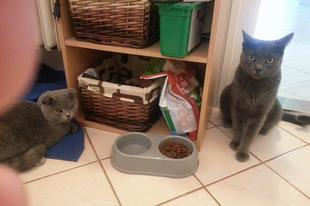 Új cica a régi mellé 2. rész
