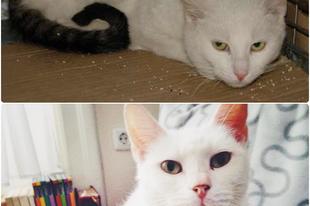 Sikereim - eddig szocializált cicáim